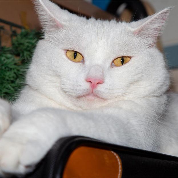 cat_dental_care_strip_4